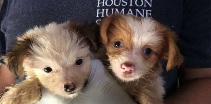 "<h3>Houston Humane Society</h3>""> </div> <div class="